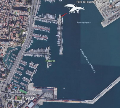 dolphin yachts location map, club de mar, palma de mallorca